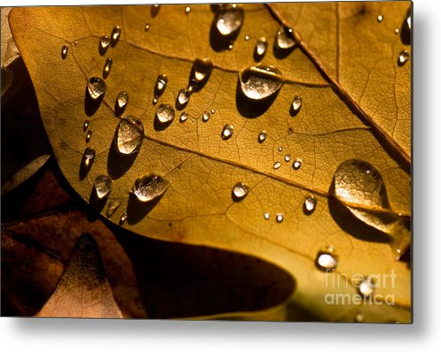 Beauty In Nature Metal Print featuring the photograph Raindrops On Leaf by Venetta Archer