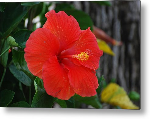 Flowers Metal Print featuring the photograph Red Flower by Rob Hans