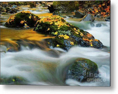 Golden Leaves Metal Print featuring the photograph Resting Gold by Mike Dawson