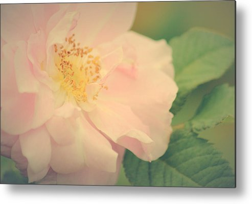 Rose Art Metal Print featuring the photograph Rose Of Mine by The Art Of Marilyn Ridoutt-Greene