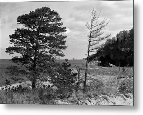 Saugatuck State Park In November Metal Print featuring the photograph Saugatuck State Park In November by James Rasmusson