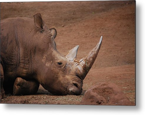 Rhino Metal Print featuring the photograph Savanna by Lakida Mcnair
