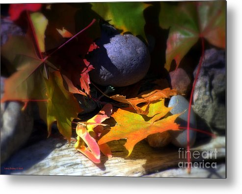 Leaves Metal Print featuring the photograph Seed by Larry Keahey
