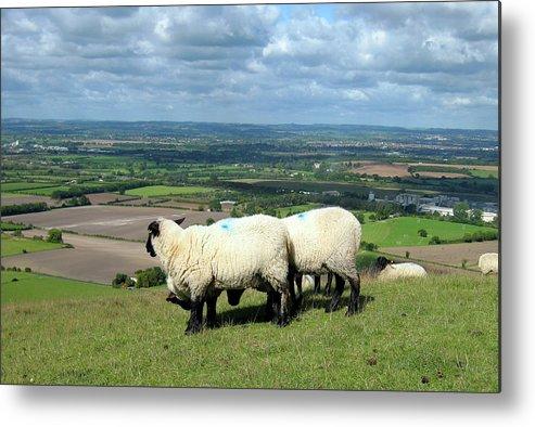 Sheep Metal Print featuring the photograph Sheep At Westbury Tor by Kurt Van Wagner