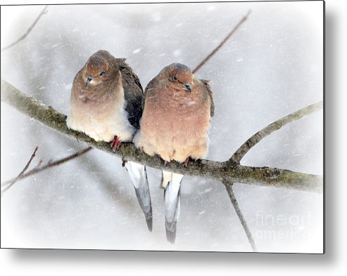 Snowy Mourning Dove Pair Prints Metal Print featuring the photograph Snowy Mourning Dove Pair by Lila Fisher-Wenzel