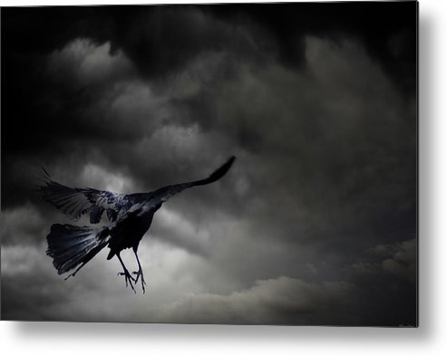 Crow Metal Print featuring the photograph Solitude by Yvonne Emerson