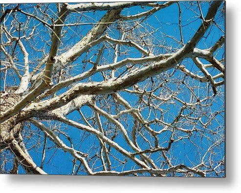 Tree Metal Print featuring the photograph Space Dream by Jennifer Trone