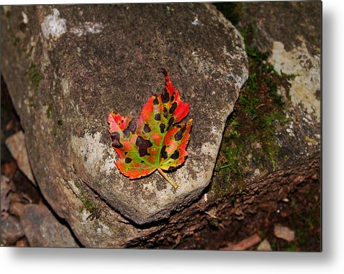 Fall Metal Print featuring the photograph Speckled Leaf by Christal Randolph
