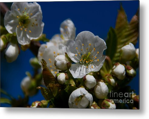 Beauty In Nature Metal Print featuring the photograph Spring Is Here by Venetta Archer