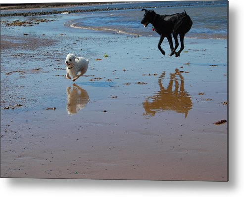Pets Metal Print featuring the photograph Spring Playtime by Sarah King