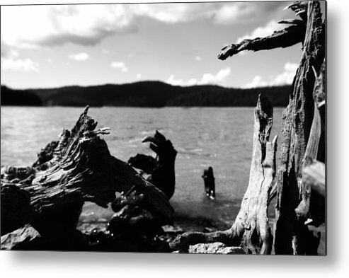 Stump Metal Print featuring the photograph Stump Lake by Tom Melo