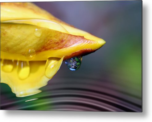 Allamanda Metal Print featuring the photograph Summer Pond by Lesley Smitheringale