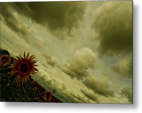 Sunflowers Metal Print featuring the photograph Sunflowers by Grebo Gray