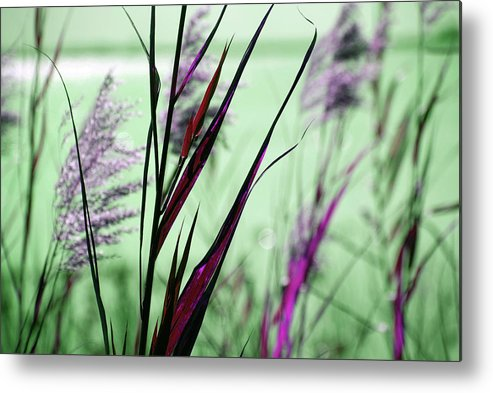 Magic Metal Print featuring the photograph That Magic Color by Susanne Van Hulst