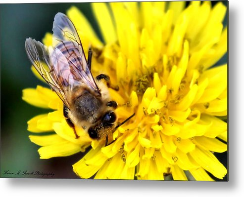 Macro Metal Print featuring the photograph The Bee by Karen M Scovill
