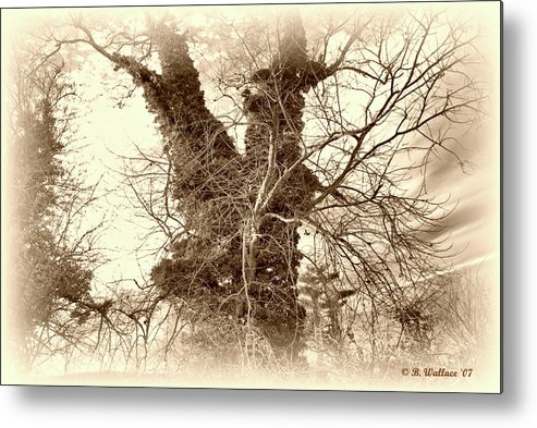 2d Metal Print featuring the photograph The Tree - Sepia by Brian Wallace
