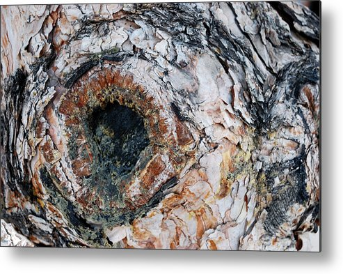 Tree Bark Metal Print featuring the photograph Tree Bark by Apurva Madia