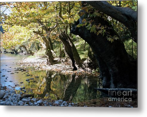 Voidomatis River Metal Print featuring the photograph Tree In The River by Loukianos Petrovas