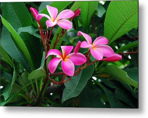 Floral Metal Print featuring the photograph Tres Floras by M Ryan