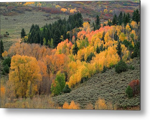 Colorado Fall Metal Print featuring the photograph True Nature by Tim Reaves