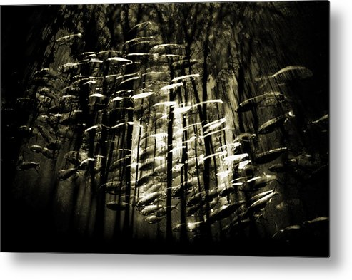 Digital Photography Metal Print featuring the photograph Untitled 2 by Tony Wood