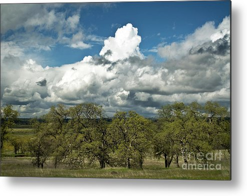 Landscape Metal Print featuring the photograph Valley Oaks by Richard Verkuyl