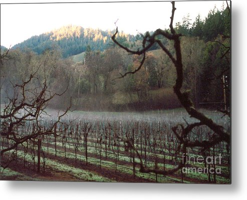 Vineyard Metal Print featuring the photograph Vineyard In The Winter by PJ Cloud