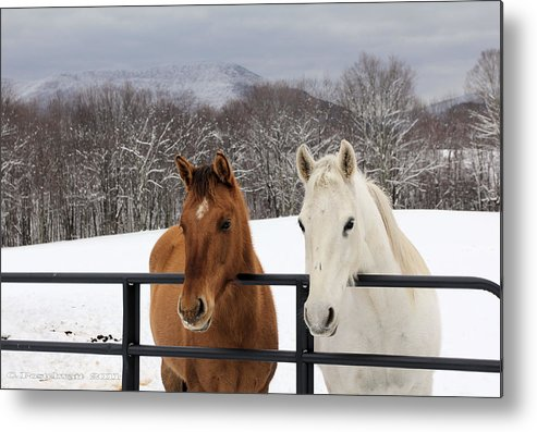 Snow Metal Print featuring the photograph Visiting by Carolyn Postelwait