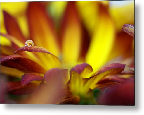 Water Drop Metal Print featuring the photograph Water Drop by Andreas Freund