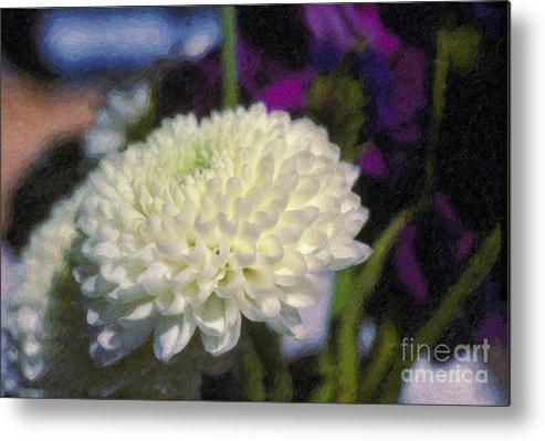 White Chrysanthemum Flower Beautiful Mum Metal Print featuring the photograph White Chrysanthemum Flower by David Zanzinger