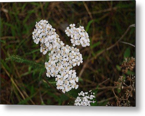 Flower Metal Print featuring the photograph White Flower by Kristen Bird