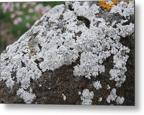 White Metal Print featuring the photograph White Moss by Kristen Bird