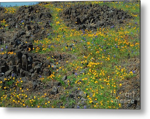 Flower Metal Print featuring the photograph Wild Flowers by Richard Verkuyl