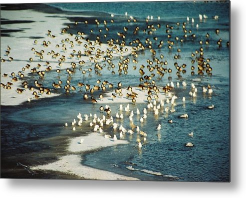 Ice Metal Print featuring the photograph Winter Abstraction by Jennifer Trone