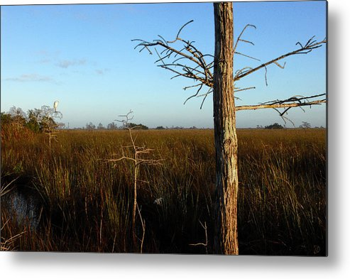 Cypress Trees Metal Print featuring the painting Winter Cypress by David Lee Thompson