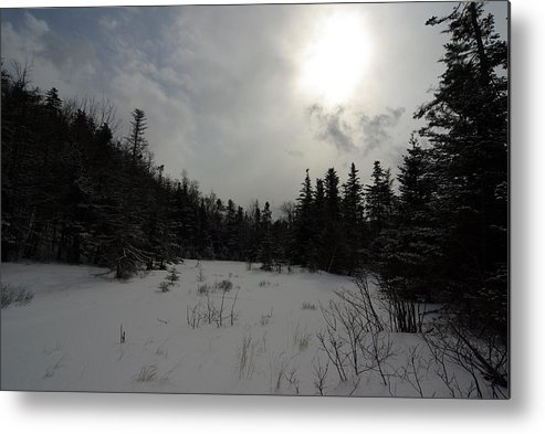 Nature Metal Print featuring the photograph Winter Woods by Eric Workman