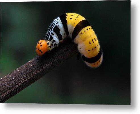 #caterpillar Metal Print featuring the photograph Yellow Caterpillar by Abdul Gapur Dayak