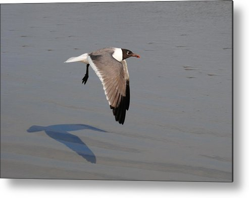 Bird Metal Print featuring the photograph You Following Me by Eric Liller