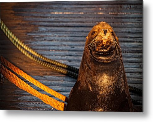 Canada Metal Print featuring the photograph Your Not Getting Past Me by Paul W Sharpe Aka Wizard of Wonders