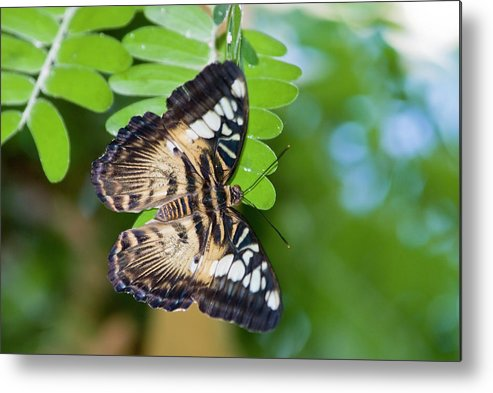 Natural Pattern Metal Print featuring the photograph Clipper by By Ken Ilio