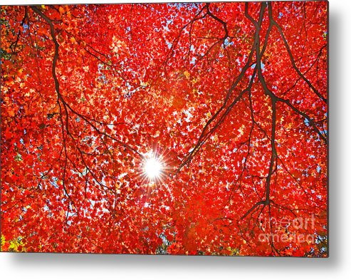 Forest Metal Print featuring the photograph Sun Light Through The Red Fall Maple by Maxim Tupikov