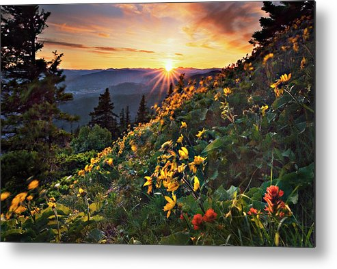 Balsamroot Metal Print featuring the photograph Twilight Of The Balsamroot by John Christopher