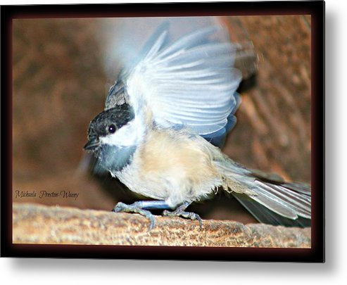 Nature Metal Print featuring the photograph Chickadee by Michaela Preston