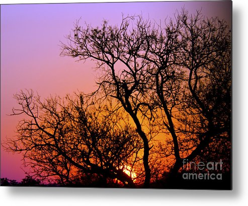 Sunset Metal Print featuring the digital art Setting Sun by Pravine Chester