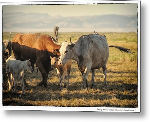 Metal Print featuring the photograph 6921 by Mary Williams Hyde