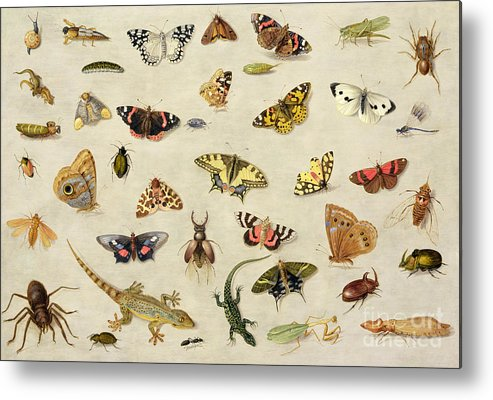 Collection Metal Print featuring the painting A Study Of Insects by Jan Van Kessel