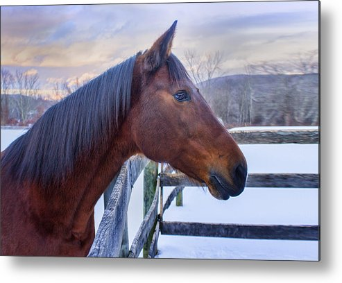Horse Metal Print featuring the photograph Abby by John Vose