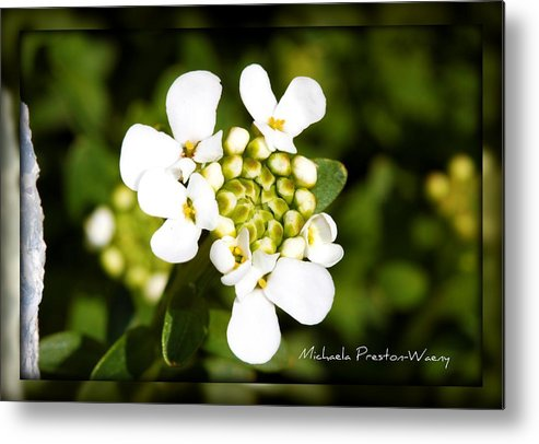 Flowers Metal Print featuring the photograph Almost There by Michaela Preston