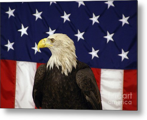 Tinas Captured Moments Metal Print featuring the photograph American Eagle And Flag by Tina Hailey