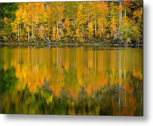 Fall Metal Print featuring the photograph Autumn Impressions 2 by Dusty Demerson